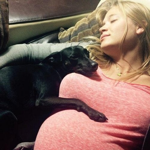 Hund med gravid kvinna