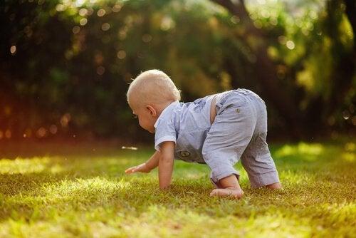 Bebis på gräsmatta.