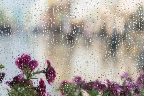Blommor och regn.