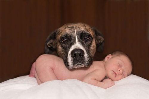 hund och nyfödd bebis
