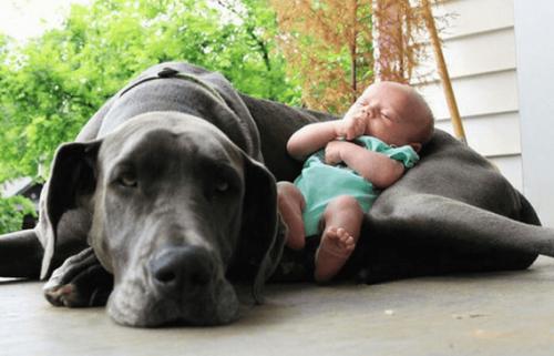 Så förbereder du dina husdjur för ankomsten av ett barn