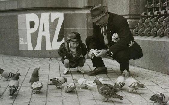Matar duvor
