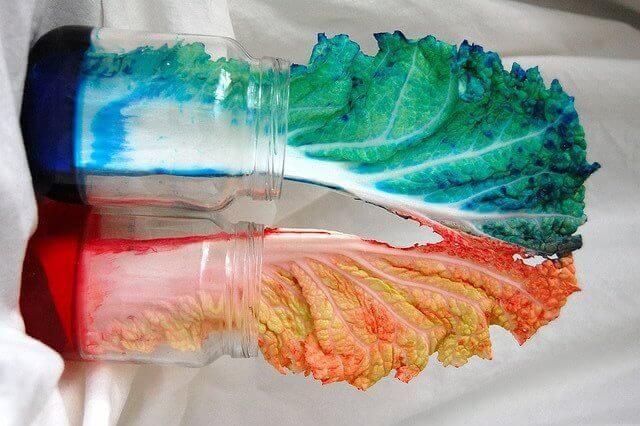 Experiment med kål sittandes i färg.