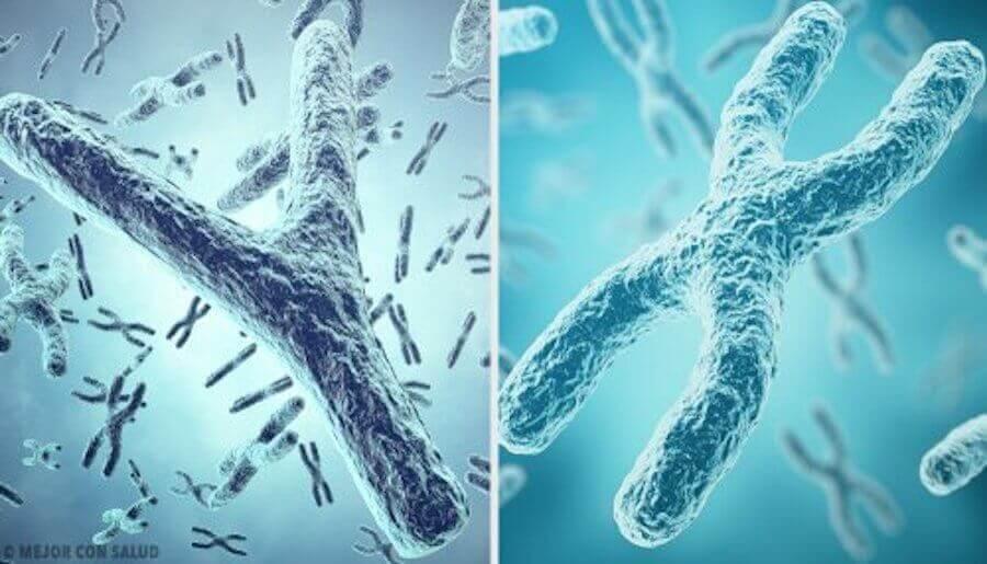illustration av kromosomer som ser ut som ett Y och ett X