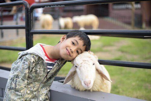 Pojke med får.
