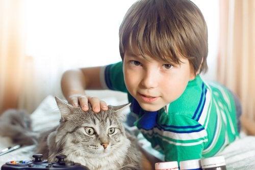 Pojke som klappar katt.