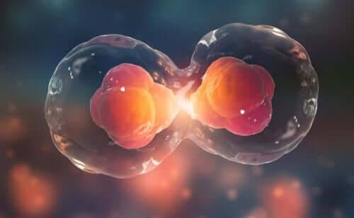 Livets byggstenar: Cellcykeln