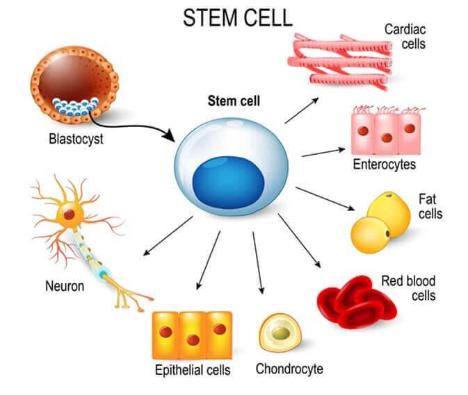 stamceller för barn