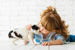 Emotionell utbildning av barn: Faser, typer och metoder