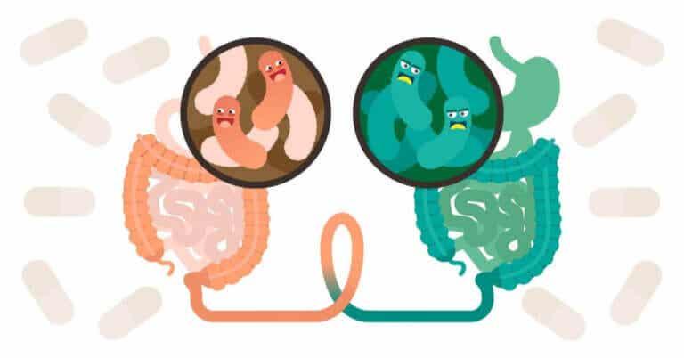 Vad är en fekal transplantation?