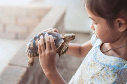 Flicka med sköldpadda