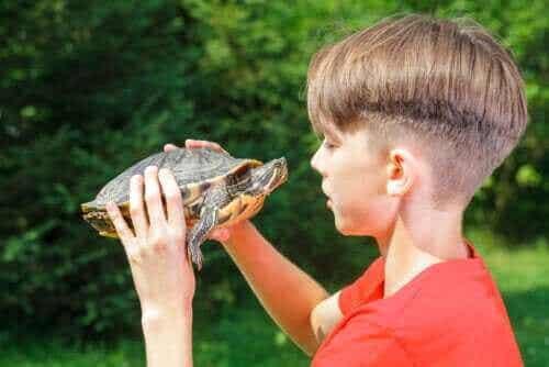 Sköldpaddsmetodens effekter på självkänslan