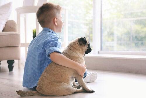 Hur kan terapidjur hjälpa barn?