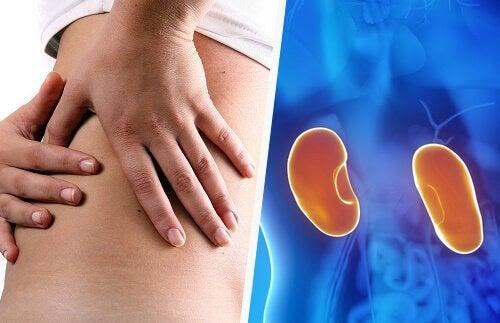 Hur påverkar njursjukdom din graviditet?